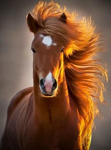 wynn horse 360
